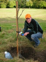 Bovis Lend Lease planting trees in Orchard